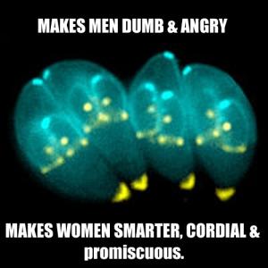 Sexist Parasite Toxoplasma gondii - Imgur