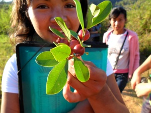 """On our way to the community shaman's house, my """"sister"""" points out goyave, used as an anti-diarrheal. Community and knowledge is shared."""